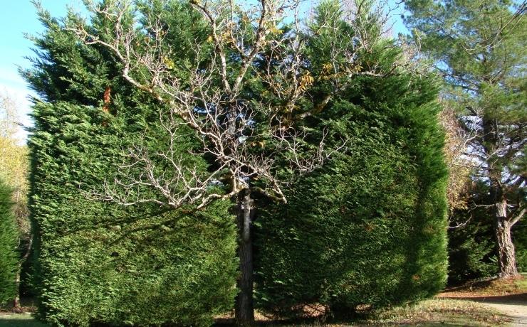 Campsite le rêve - Fir tree