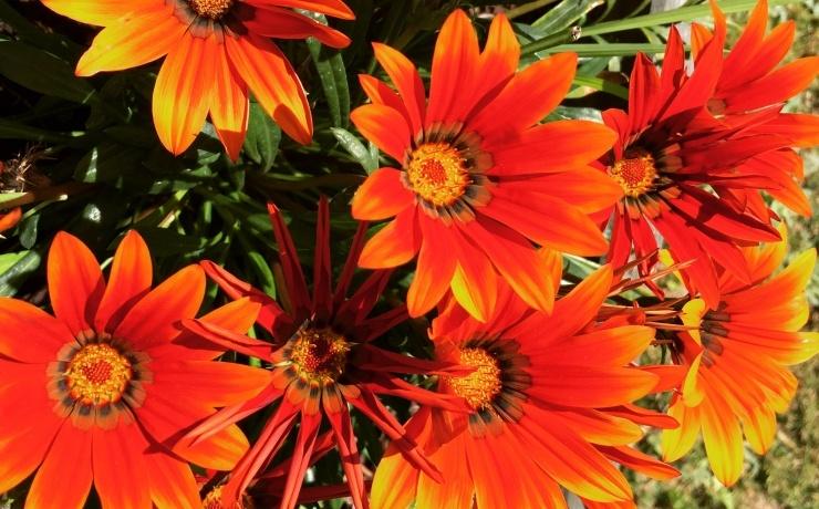 Campsite le rêve - Flowers