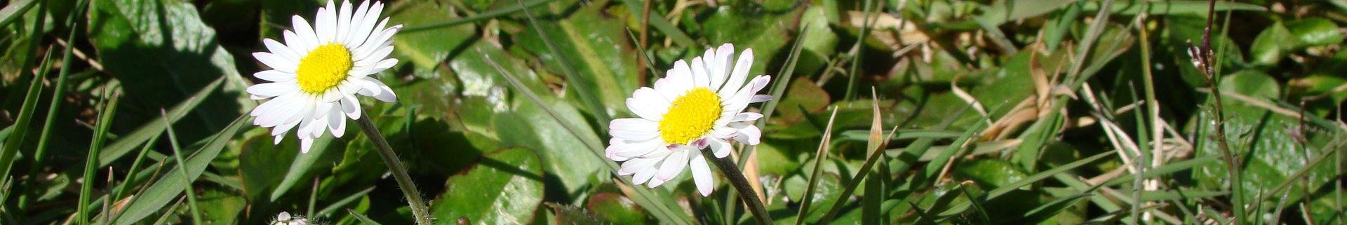 Fleurs - Camping Le Rêve
