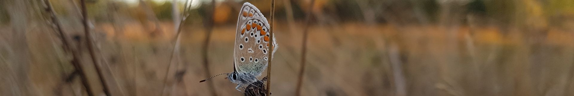 Grands emplacements spacieux - Le Rêve - Papillon