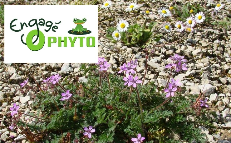 Camping Zéro phyto - Engagement protection de la nature