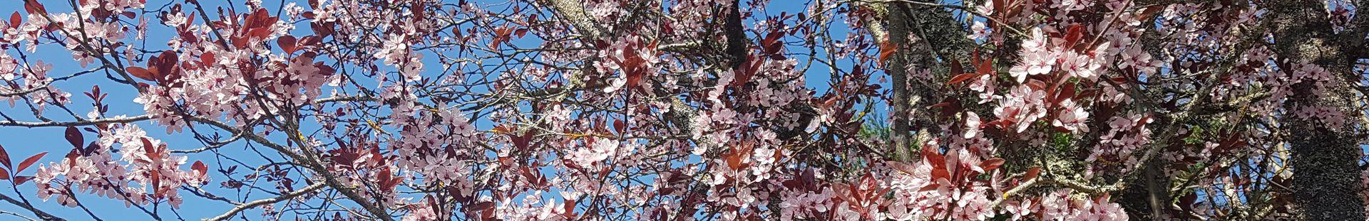 Un accueil chaleureux comme les premières couleurs du printemps